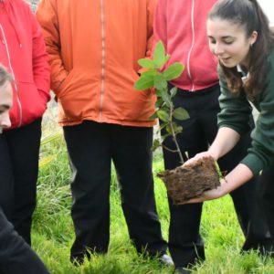 Un árbol para la paz en Santa Rosa de Lima